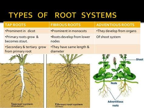 roots of style do you live in a minimalist traditional house root stem morphology