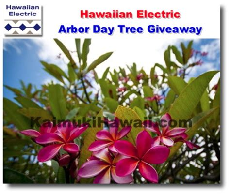 Free Tree Giveaway 2016 - first friday hawaii art walk newsletter november 2016 first friday hawaii