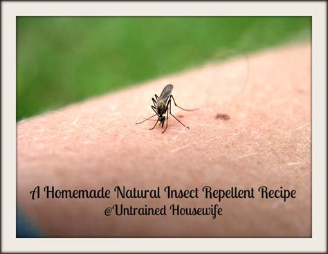 does lavender repel bed bugs a homemade natural insect repellent with essential oils