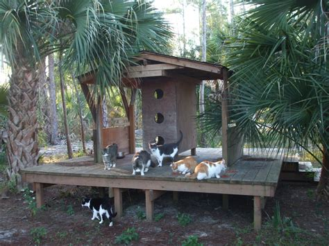cat and dog house wooden dog cat house in south florida custom woodwork south florida