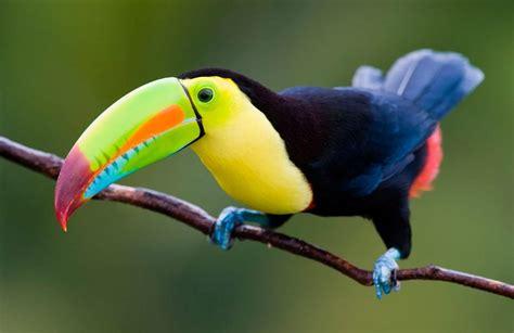 imagenes animales exoticos hermosos los animales m 225 s caros del mundo