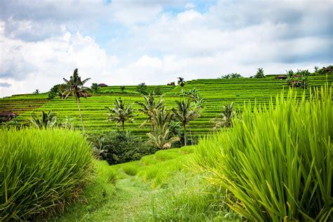 wallpaper alam pedesaan indonesia gambar pemandangan bidang tanah pertanian halaman