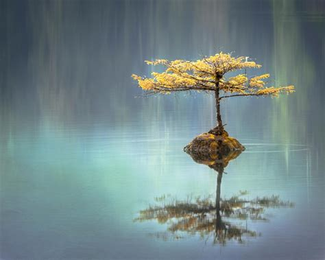fotos interesantes best 100 reflection pictures download free images on