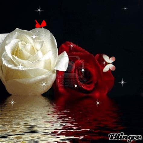 bellas imágenes in english rosas bellas fotograf 237 a 132157811 blingee com
