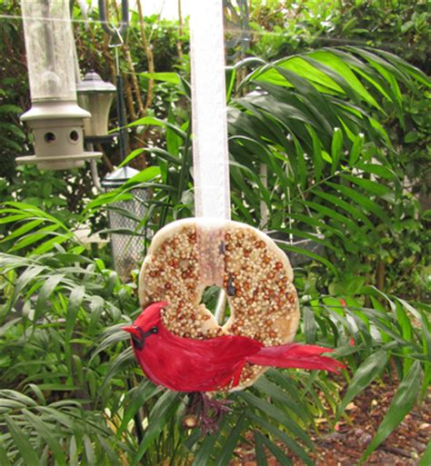 bagel with seeds a treat that s literally for the birds