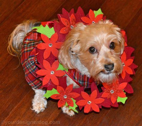 poinsettia dogs pretty and poisonous poinsettias yourdesignerdog