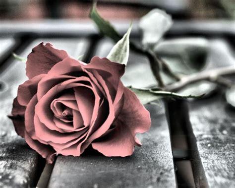 Imagenes De Flores Goticas | imagenes goticas rosas im 225 genes taringa