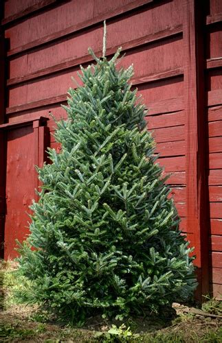 shipping site wide   christmas tree