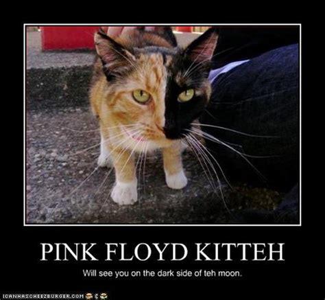 Pink Floyd Meme - vh 129191883264051821