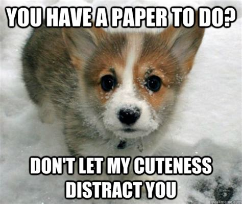 Cute Puppy Meme - distractingly cute puppy memes quickmeme
