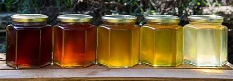 color of honey how to choose the best honey
