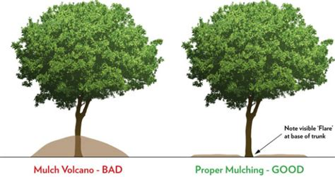 hortus 5 journal say no to mulch volcanoes