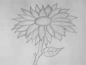 how to draw pencil drawing pencil drawings pencil drawing sunflower