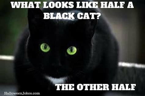 Black Cat Meme - halloween joke black cat meme 2 what looks like half a