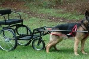 Our favorite dog pictures dog pull carts