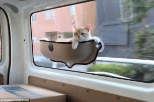 Window Seat For Cat - tooty store s cat hammock video goes viral daily mail online