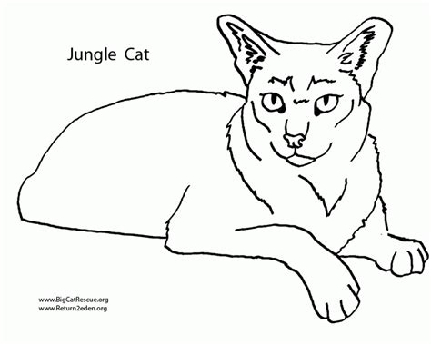 printable coloring pages of wild cats wild cat coloring pages az coloring pages