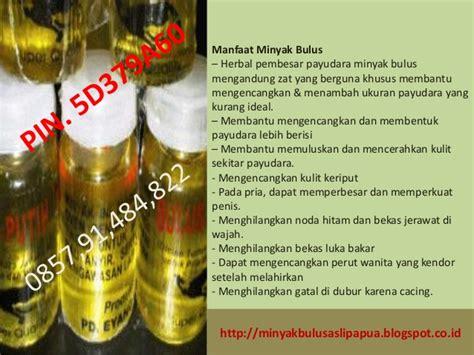 minyak bulus papua harga minyak bulus papua tidak bau