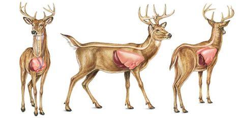 printable deer vital targets easiest way to get started hunting in portland area