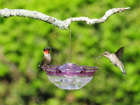 homemade hummingbird nectar recipe really cool garden blog