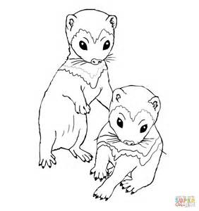 coloring book ktt ferret kits coloring coloring