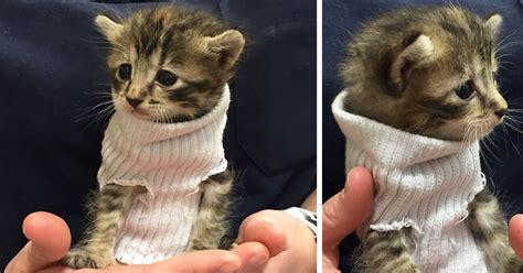 sock cat sweater kitten rescued from hurricane matthew gets tiny sock