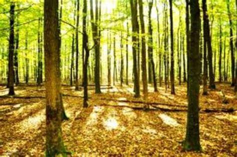 Suchen Und Kaufen by Suchen Wald Zum Kaufen Oder Auch Zum Durchforsten