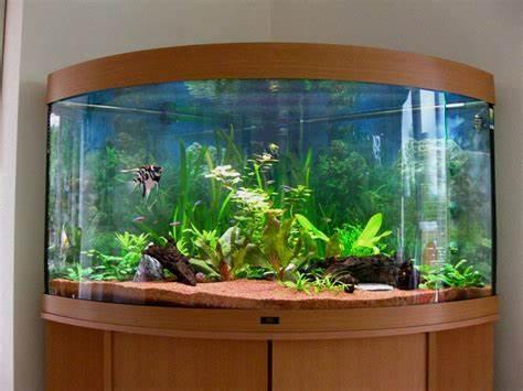 Exclusive Aquarium Design