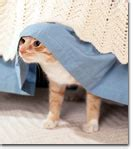 cat hiding under bed fear of thunderstorms fireworks and other noise phobias in dogs and cats
