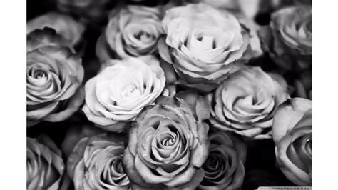 black and white roses wallpaper 4k free 4k wallpaper