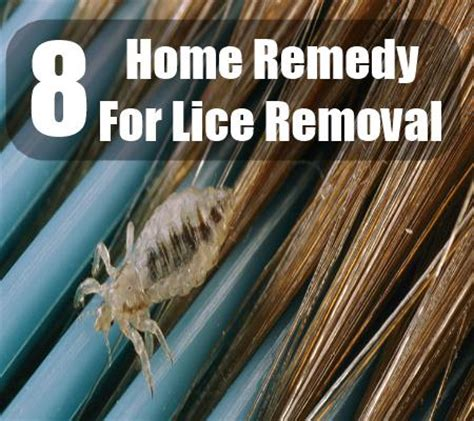 beneficial home remedy for lice removal
