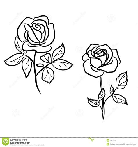 simple rose tattoo outline two roses white 29911001 jpg 1300 215 1390 tatoos