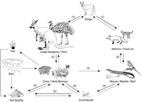 dingo diagram related keywords suggestions for dingo diagram