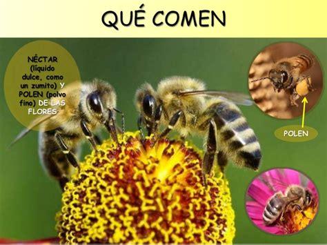 libro minicuentos de abejas y las abejas para educaci 243 n infantil