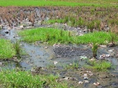 Dak Limbah Cair Dari Aktivitas Institusi Dan Industri Anwar jendela ku definisi limbah domestik pertanian dan industri