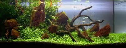 Plants Low Light tobias coring und das aquascaping aqua rebell