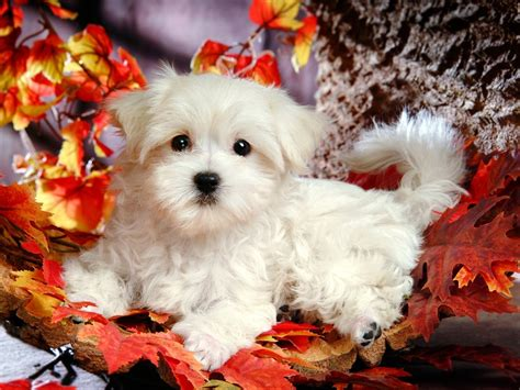 white fluffy dogs white fluffy puppy xcitefun net