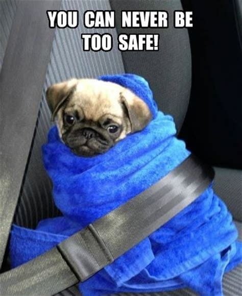 pug pun names 1448 best pugs images on