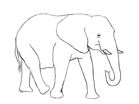 how to draw a doodle elephant elephant line drawing