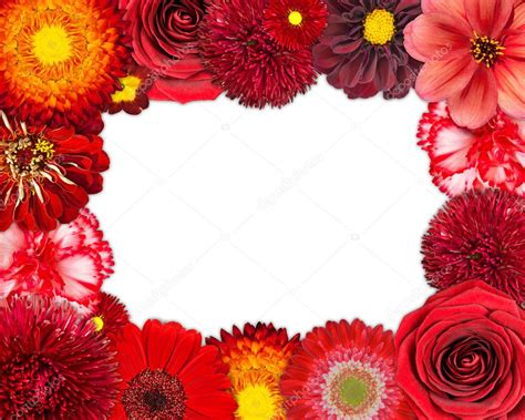 Type Of Cornice Flower Frame With Red Flowers On Blank Background Stock