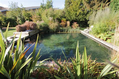 natural pool top 10 tips for building an affordable diy natural pool