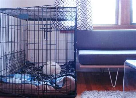 dog proofing your house tips to train your dog in an apartment