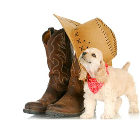 country songs about dogs animal loving country