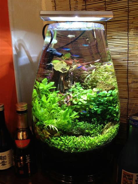 membuat aquascape nano tank 156 best images about planted nano aquariums on pinterest
