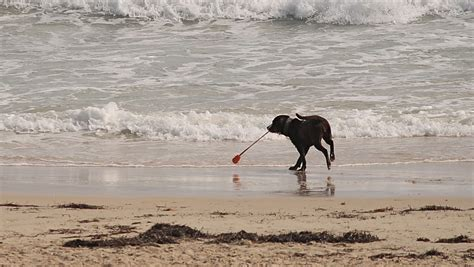 florida beaches that allow dogs petition for brevard county beaches to allow dogs nears 5 000 signatures