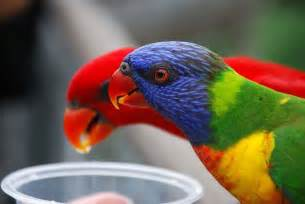 colorful parrots amazing world beautiful colorful birds nature