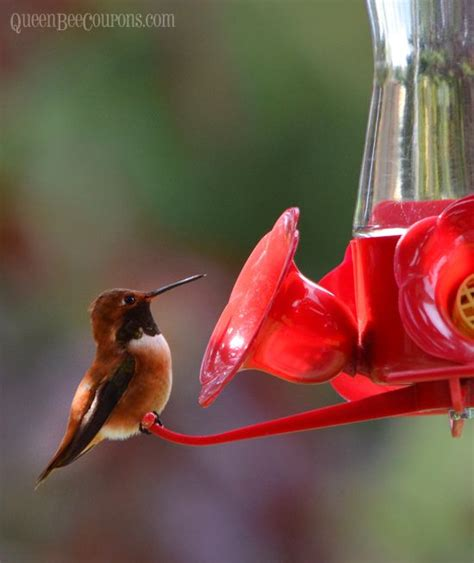 best 25 homemade hummingbird nectar ideas on pinterest