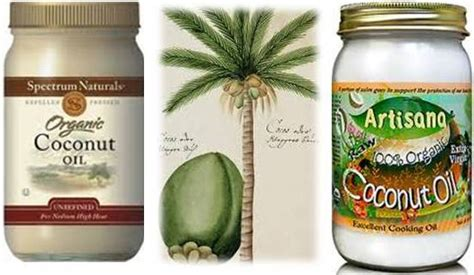 coconut bad for dogs coconut for dogs and cats health benefits ottawa and health