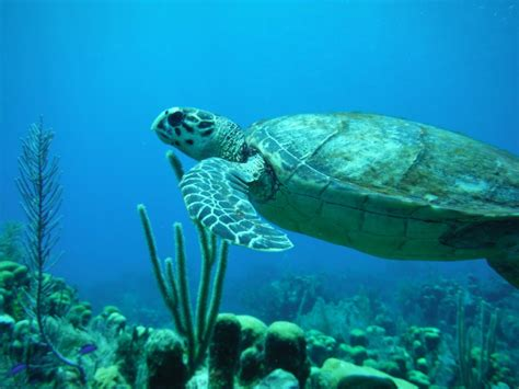 roatan dive roatan scuba diving roatan cruise excursions