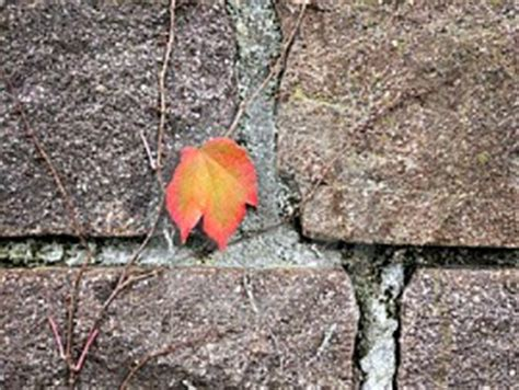 themes of the story last leaf short story analysis the last leaf by o henry the
